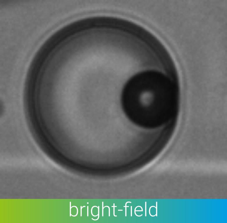 bead in droplet in bright-field contrast